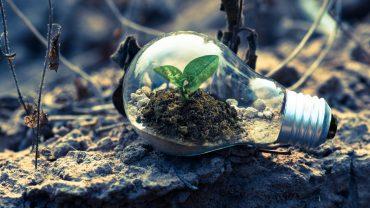 plant dirt lightbulb